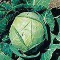Cabbage Seeds- Copenhagen Market- 300+ Seeds