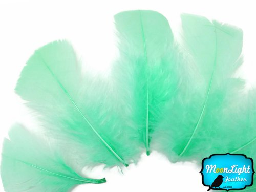 - Turkey Feathers, Turkey Plumage - Aqua Turkey T-base Plumage Feathers - 0.5 Oz.