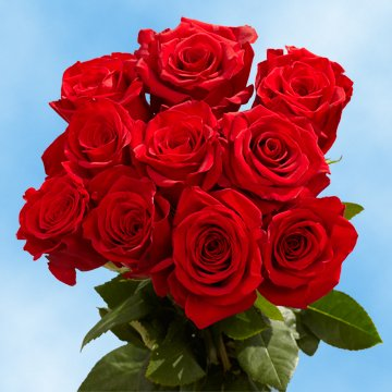 GlobalRose 50 Fresh Cut Red Roses - Long Stem Red Roses - Fresh Flowers Express Delivery - Perfect for Birthdays