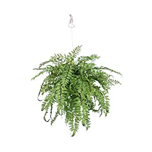 "Gold Eagle USA Artificial Hanging Fern Wall Piece Decor 28"" x 28"" x 20"" 71"