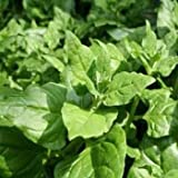 Outsidepride New Zealand Spinach - 200 Seeds