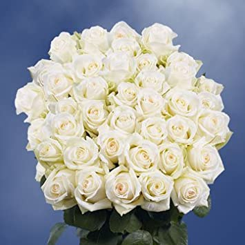 Amazon Globalrose 100 Fresh Cut White Roses With A Creamy