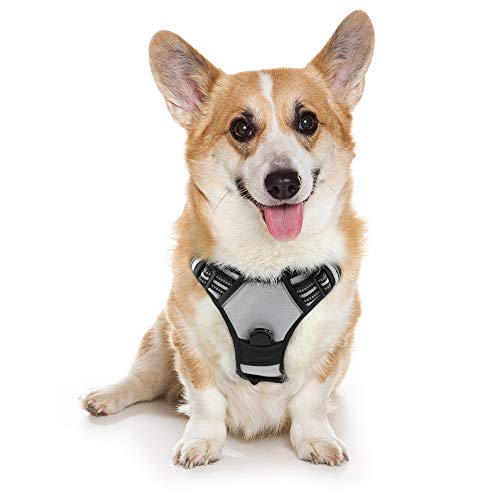 """rabbitgoo Dog Harness, No-Pull Pet Harness with 2 Leash Clips, Adjustable Soft Padded Dog Vest, Reflective No-Choke Pet Oxford Vest with Easy Control Handle for Medium Dog, Gray (M, Chest 19.1-29.3"""")"""