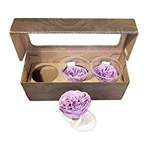 KIKA DECO Preserved Gardens Roses Head Pack 100