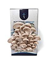 Grey Oyster Mushroom Grow Kit, botanically classified as Pleurotus ostreatus, is our best selling grow kit. These chef favorite mushrooms have a sweet woodsy taste and can be substituted well into many mushroom recipes. Grow straight out of the box i...