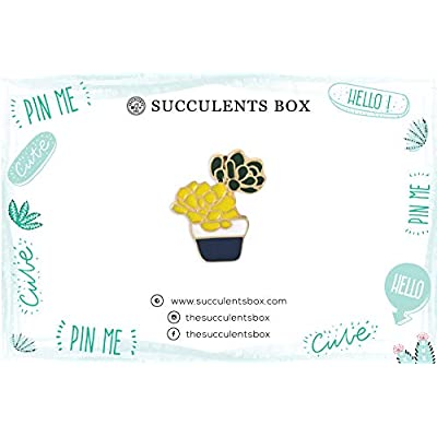 Succulent Pin (Succulent Pin) : Garden & Outdoor