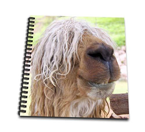 Danita Delimont–Wildlife–ペルー。Suriアルパカ野生生物、Awana Kancha–sa17kwi0102–キムリ・ウィット–Drawing Book 4x4 notepad db_87045_3