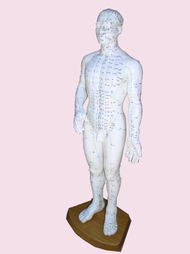 Male Acupuncture Model 20