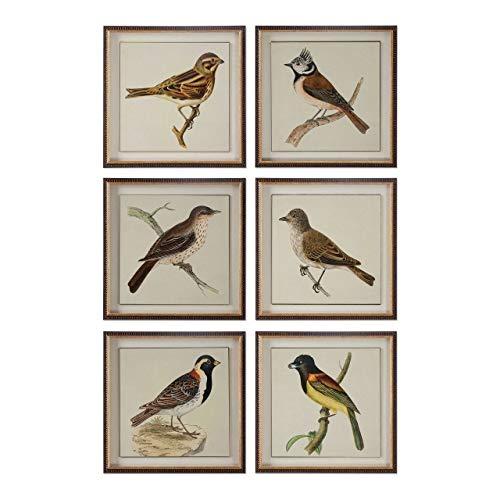 Uttermost 33627 Spring Soldiers Bird Prints, Set 6, Multicolor