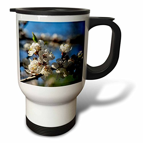 3dRose Alexis Photography - Flowers Sakura Beautiful - Cluster of beautiful Japanese apricot flowers, blue, green backdrop - 14oz Stainless Steel Travel Mug (tm_286623_1) by 3dRose