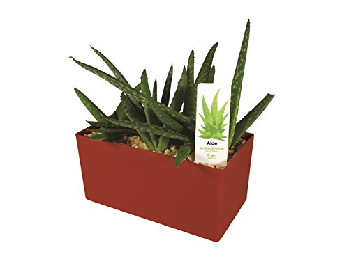 DuneCraft PW-0110 Indespensible Aloe