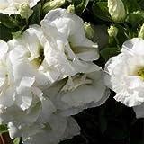 Outsidepride Lisianthus Sapphire White - 100 Seeds