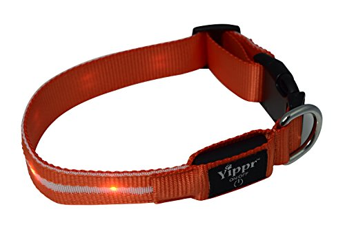 Premium LED Dog Collar By Yippr - USB Rechargeable Led Lighted Dog Collar With 4 Settings - Increase Visibility, Safety Collar, Night Use with Ultra Bright Blinking, Light Up Nylon - Phone Number Premium Outlets