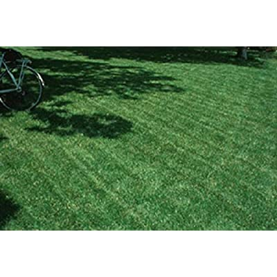 1lbs Blackjack Bermudagrass Seed, Perfect for The Home Lawn, Parks or Sports Fields. by AchmadAnam : Garden & Outdoor