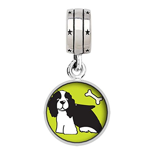 Springer Spaniel Dog Photo