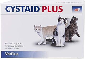 Jelly Similar Blood Hip Cats Urine