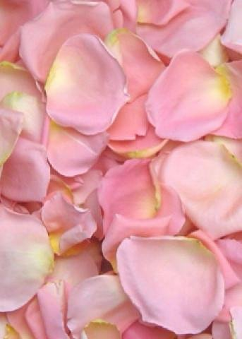 Biodegradable Freeze Dried Rose Petals in Pale Pink8 Cups