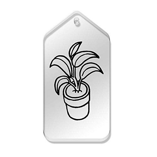 En tg00058827 X Maceta' 'planta Mm Claras De 34 10 66 Azeeda Etiquetas qfOwP4Ht