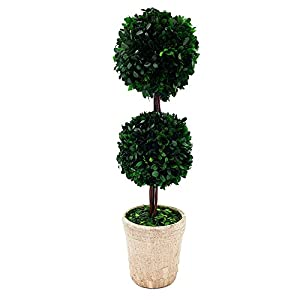 Modern Home BOXWOOD-DOUBLEBALL28 50