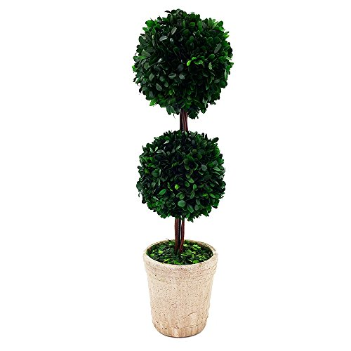 Modern Home Real Preserved Boxwood Double Ball Topiary For Sale