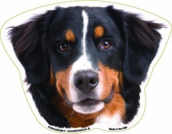 - Bernese Mountain Dog Magnet