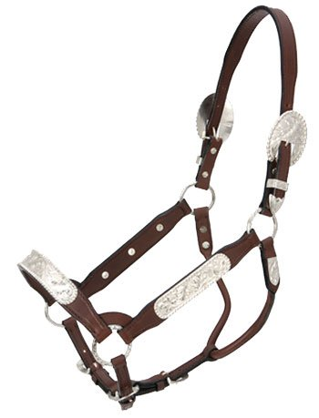 Royal King Congress Show Halter Yearling - Edge Show Halter