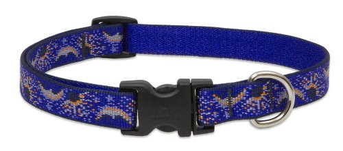 LupinePet 3/4-Inch Starry Night 13-22-Inch Adjustable Collar for Medium to Large Dogs
