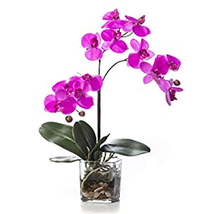 Petals – Faux Phalaenopsis Orchid Accent – Fuchsia – Amazingly Lifelike – Vibrant Colors – Hand-Crafted – 14 x 9 Inches