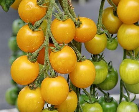 Bobby-Seeds Tomatensamen Cherrytomate Goldkrone Portion