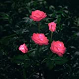 New Model Outdoor Decorative Solar Rose LED Lights, for Garden Yard Patio Pathway, Pink