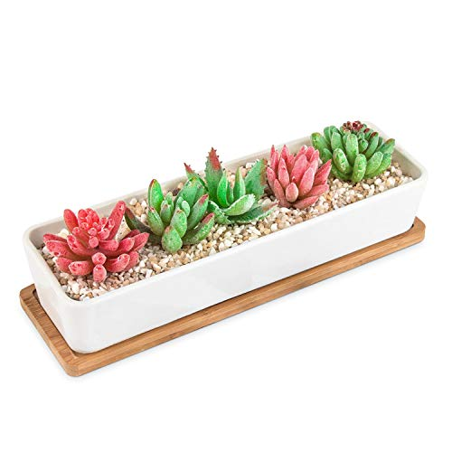 HOMENOTE Larger Rectangle Planter Pots (Size:11.1 x 3.54 x 2.17 inch) for Small Succulent Plants Long White Ceramic Succulent Planter Pots with Drainage Hole and Bamboo Tray (Sale Pots For Succulent)