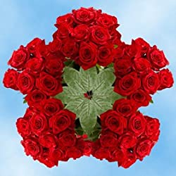 Buy Red Roses | 250 Fresh Cut Freedom Roses for Valentine's Day