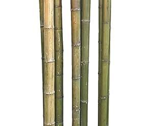 Bambú Tubo Moso sin acabar, naturgrün hasta Amarillo Marrón, durch. aprox. 6hasta 7cm, longitud aprox. 180cm