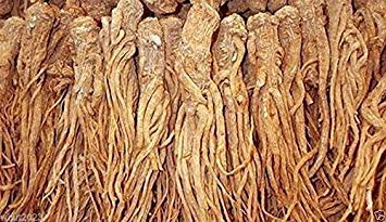 (Female Ginseng Seeds - Dong Quai, Chinese Medicine Herb, Angelica Sinensis)