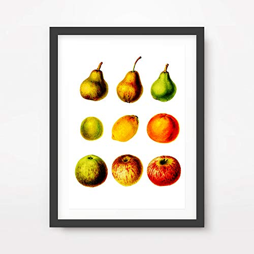 - FRUITS SELECTION CHART DIAGRAM ART PRINT Illustration Poster Rustic Traditional Kitchen Home Decor Room Wall Picture A4 A3 A2 (10 Size Options)