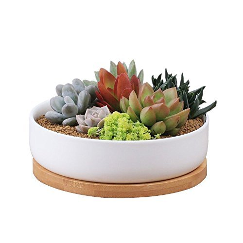 Y&M(TM) Succulent Planter Ceramic with Bamboo Tray, 6 inch Modern White Ceramic Round Design for Succulent Planter Cactus Pots Decorative Flower Holder Bowl Basin,Tub (Planter Cactus Bowl)