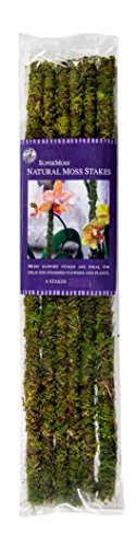 (SuperMoss (22050) Moss Stakes Preserved, Fresh Green, 18