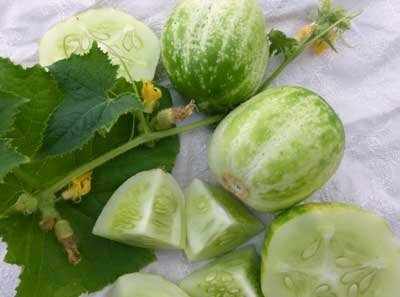 David's Garden Seeds Cucumber Pickling Richmond Apple Green DAF254 (Green) 25 Organic Heirloom Seeds