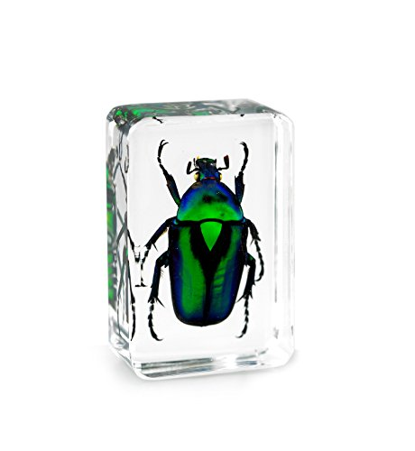 Green Chafer Beetle Paperweights Specimen for Science Education Paperweight for Book for Office for Desk(1.8x1.1x0.8)