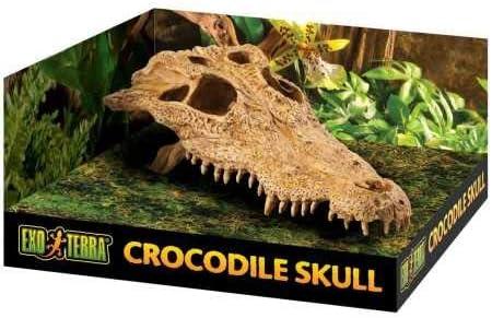 Exo TerraCueva Cráneo de Cocodrilo