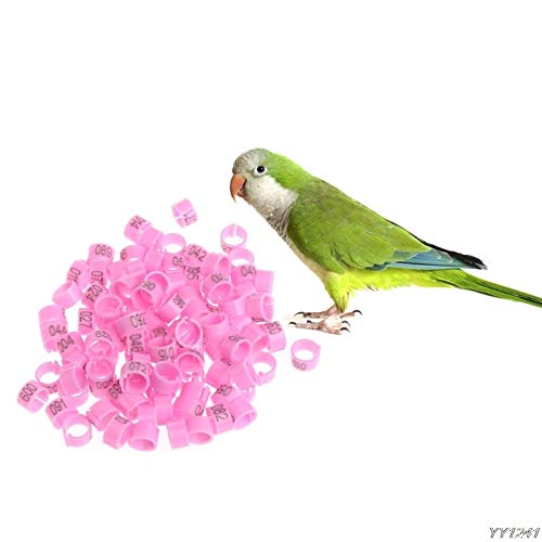 Bird Toys - 100 Pcs 8mm Identify Ring Carrier Pigeon Training Leg Number  Bird Bands Farming Equipment W110 - Bands Birds Parrotlets Conures  Parakeets