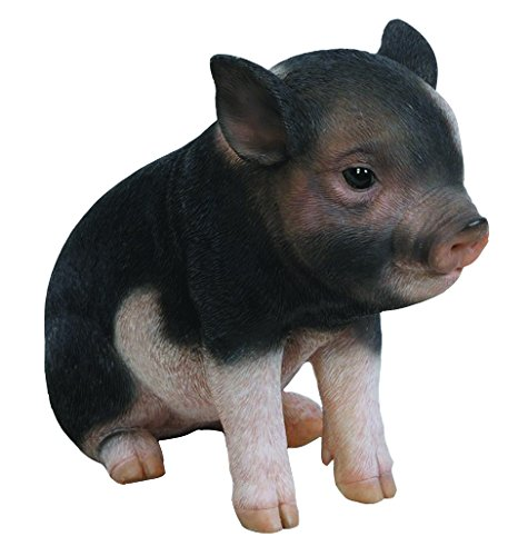 k Brown Sitting Baby Pig, 6