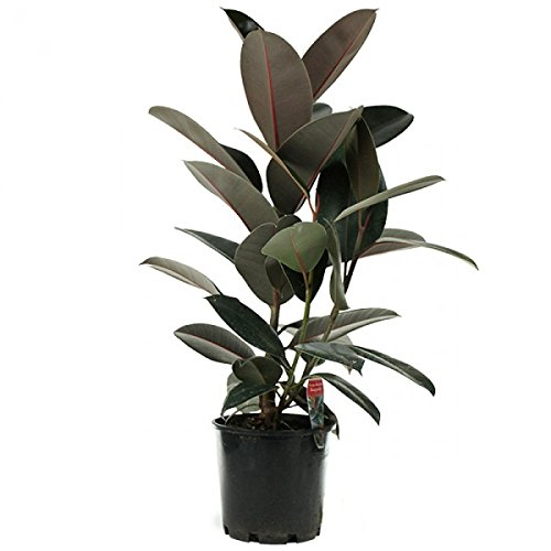8 Low-Maintenance Houseplants 8