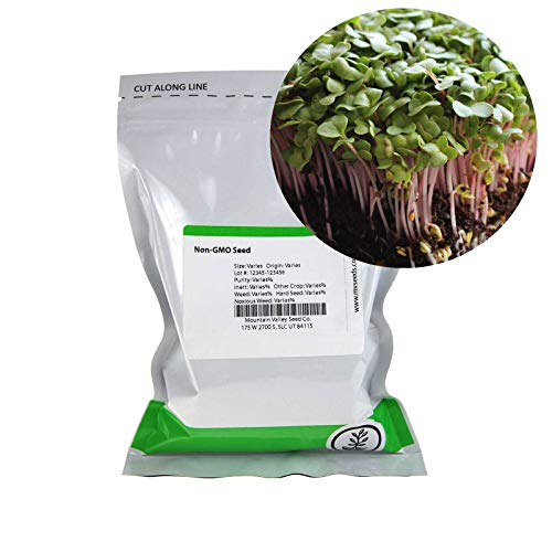 Sprouting Sprouts Seed (Radish Sprouting Seed - Red Arrow Variety - 1 Lb Seed Pouch - Heirloom Radish Sprouts - Non-GMO Sprouting and Microgreens)