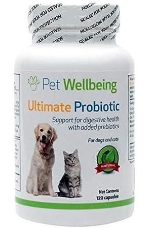 Pet Wellbeing - Probiótico Último con Prebióticos para ...