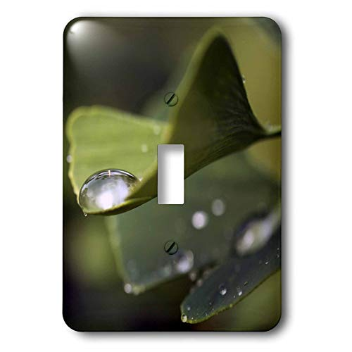 3dRose Stamp City - nature - Macro photograph of a water drop on a ginkgo biloba leaf. - 2 plug outlet cover (lsp_315609_6)