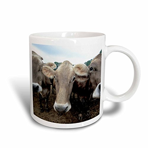 3dRose Jersey cows, Hurd Farm, Hampton NH US30 JMO0597 Jerry and Marcy Monkman Ceramic Mug, 15-Ounce
