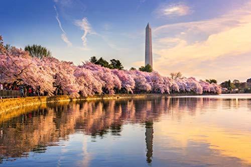 Washington DC Cherry Blossoms Monument Mall Spring Photo Mural Giant Poster 54x36 - Monument Lincoln Dc Washington