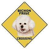 Bichon Frise Crossing 12