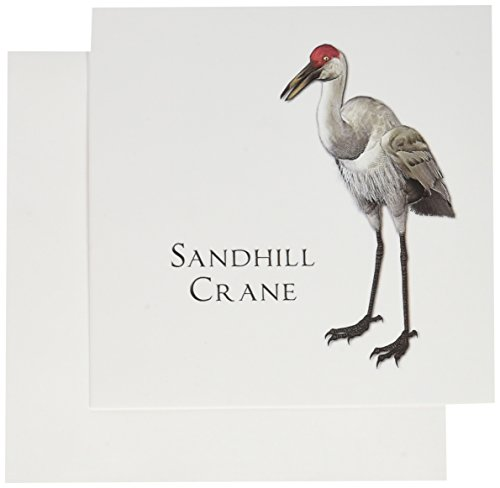 Crane Com Holiday - 3dRose Sandhill Crane Shorebird - Greeting Cards, 6 x 6 inches, set of 6 (gc_51595_1)